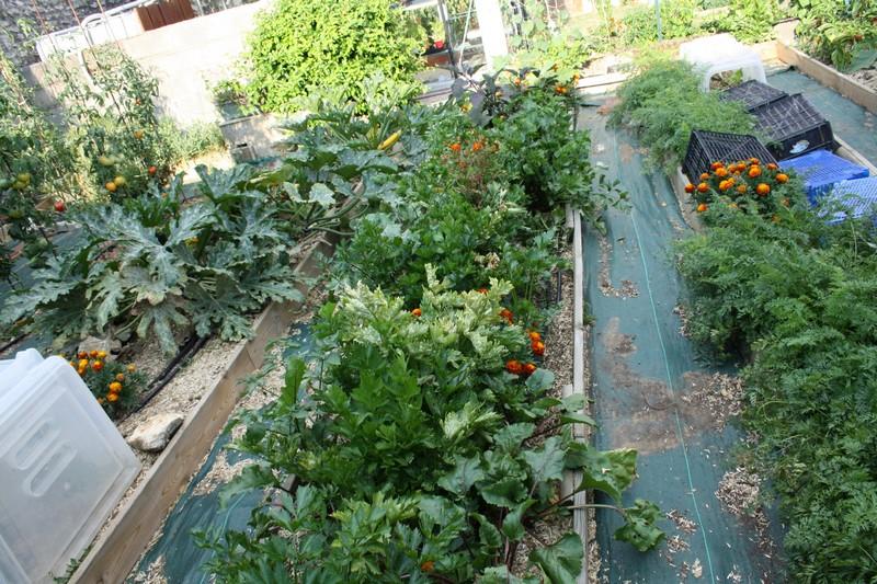 Largeur des planches au jardin forum de jardinage for Planche potager